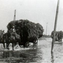 Boerenleven tijdens WOII