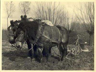 Paardenspan met ploeg