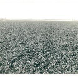 Stuk landbouwgrond tussen Schelde en Scheldedijk