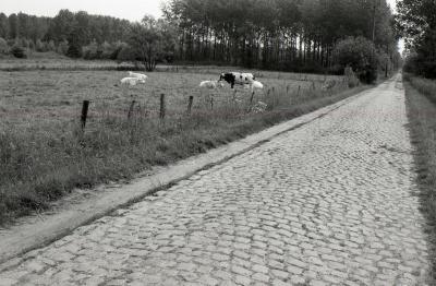 Lange Gaanweg 1990-2012  1