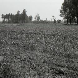 Dweerse Gaanweg 1990-2012 1