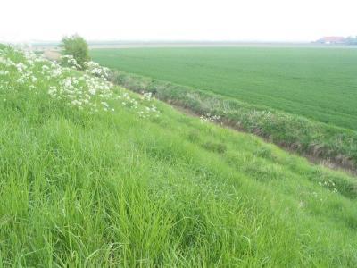 Dijk en polder