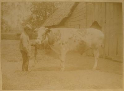 Landbouwer met os