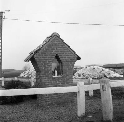 Muurkapelletje, Stekene